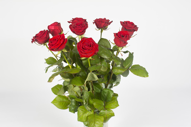 bouquet de roses rouge cerise livraison fleurs le mans. Black Bedroom Furniture Sets. Home Design Ideas