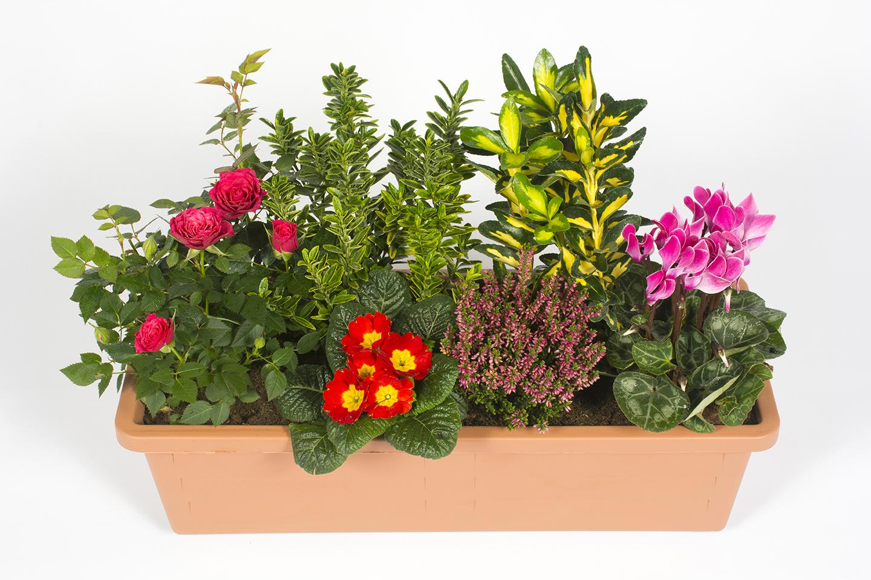 Jardini re pour s pulture livraison fleurs le mans for Composition florale exterieur hiver