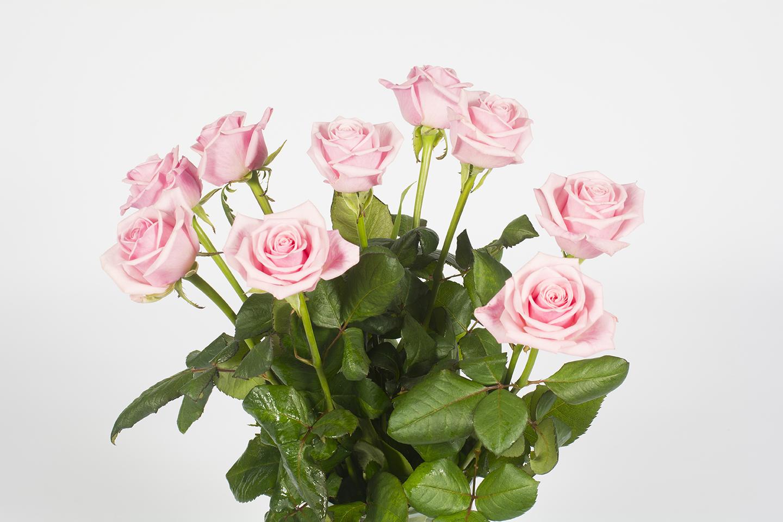 Photo de bouquet de rose fashion designs for Rose livraison